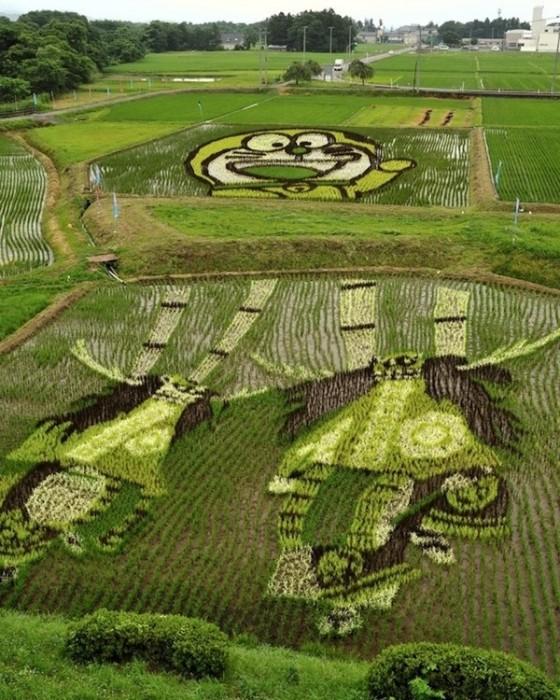 25560629 144709 ศิลปะบนแปลงนาข้าว ของญี่ปุ่น...เกินคำบรรยาย..