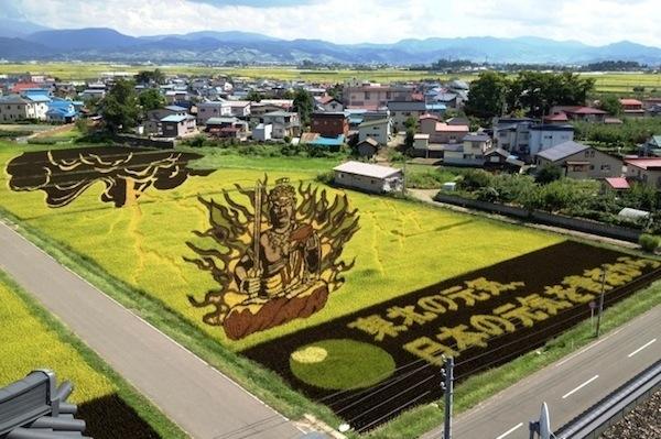 25560629 144745 ศิลปะบนแปลงนาข้าว ของญี่ปุ่น...เกินคำบรรยาย..