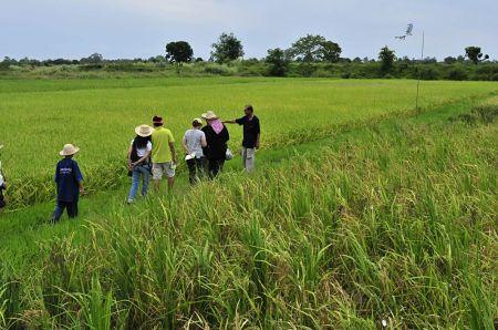 O10887204 9 450x298 สนุกกับวิถีชีวิตชาวนาชาวไร่ โครงการเกษตรอินทรีย์สนามบินสุโขทัย
