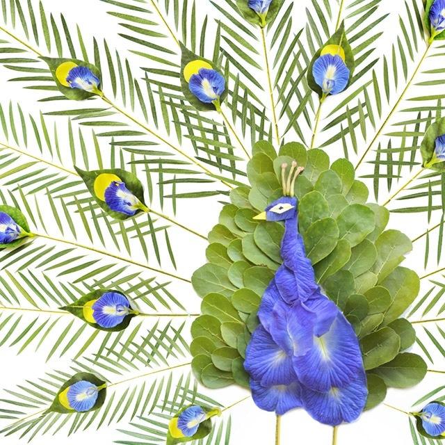 25560720 084623 ชมภาพศิลปะบนInstagram..ภาพนกหลากหลายจากกลีบดอกไม้และใบไม้