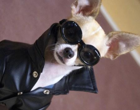 world-best-dressed-dog