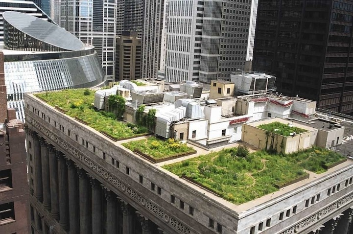 25561017 111506 ต้นไม้ 20,000 ต้น บนหลังคา City Hall เมืองชิคาโก้ ช่วยลดความร้อน เก็บน้ำฝน และให้ความสุขกับคนเมือง