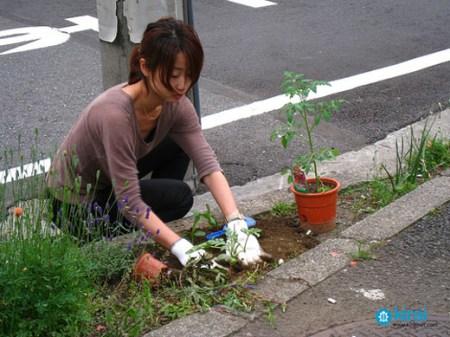 guerilla gardening tokyo 2 450x337 Guerrilla Gardener กองโจรสีเขียว