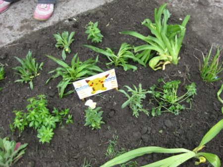 img 12581 450x337 Guerrilla Gardener กองโจรสีเขียว