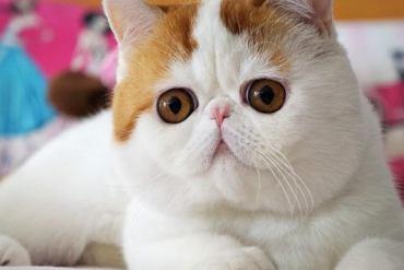Snoopybabe แมวเซเลบฯ บนโลกออนไลน์ 29 - แมว