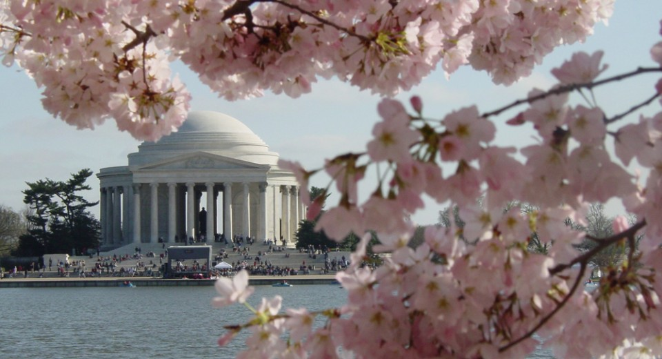 cherry blossom fest jefferson background 1 เทศกาลซากุระ  National  Cherry Blossom Festival
