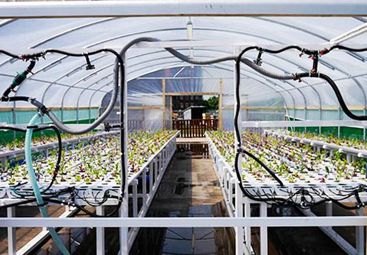 wpid queens university urban agriculture laboratory 3 ตัวอย่างฟาร์มเพาะปลูกในเมือง..แนวโน้มของสถาปัตยกรรมและการวางแผนเมืองในอนาคต
