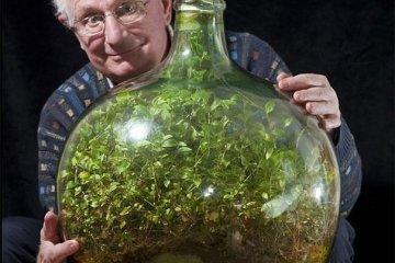 สวนขวดอายุ 54 ปี ในระบบนิเวศน์ปิด เคยเปิดมารดน้ำเพียงครั้งเดียวในปี 1972 28 - Green