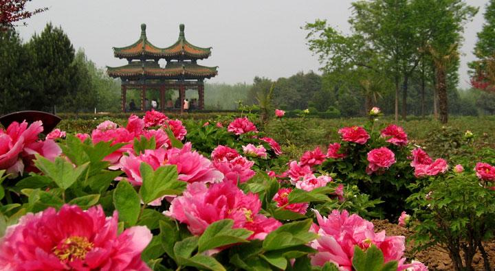 p565 d20130415151958 Luoyang Peony Festival เทศกาลดอกโบตั๋น