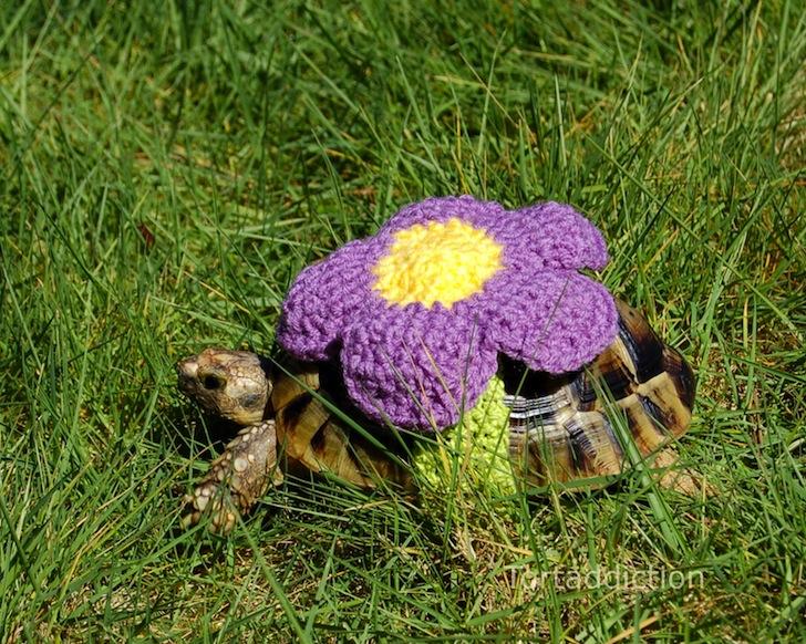 tortoise cozie flower ถ้กเสื้อไหมพรมให้เต่าน้อย