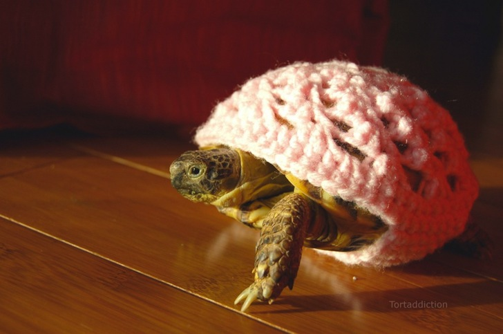 tortoise cozie white ถ้กเสื้อไหมพรมให้เต่าน้อย