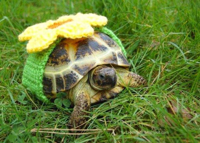 tortoise-cozie-yellow-flower