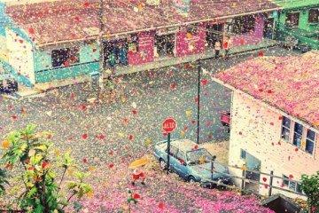 เมื่อภูเขาไฟระเบิดเป็น 8 ล้านกลีบดอกไม้ ปกคลุมทั่วหมู่บ้านใน Costa Rica 14 - Sony (โซนี่)