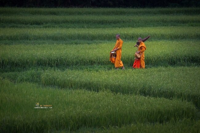 20140505 145950 ภาพความสุขในวิถีชีวิตแบบไทยๆโดย Sangkhom Hungkhunthod
