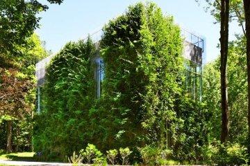 บ้าน และแกลลอรี่ศิลปะ ที่ห่มคลุมด้วยชีวิตสีเขียวที่งดงาม