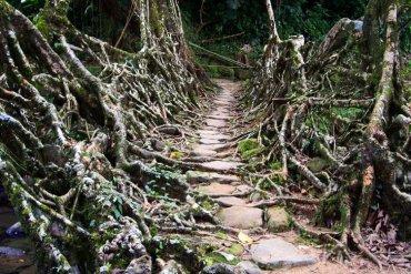 สะพานมีชีวิต เกิดจากรากไม้และเถาวัลย์..เป็นวิธีสร้างสะพานจากภูมิปัญญาท้องถิ่นของชาวเขาในอินเดีย 19 - ธรรมชาติ