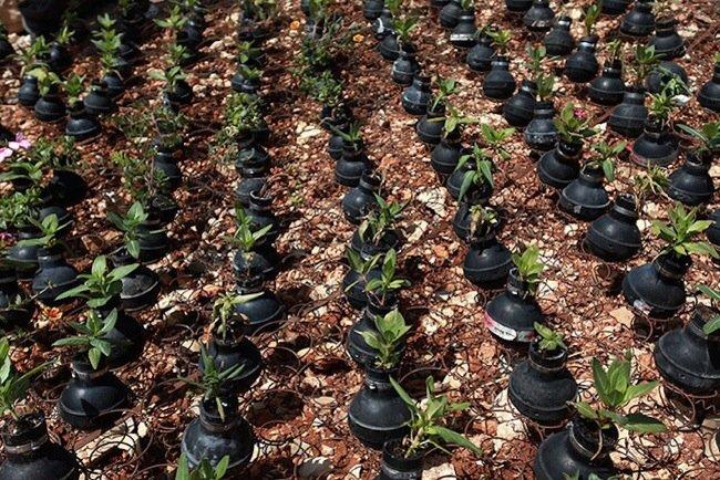 20140602 212041 76841292 ชาวปาเลสไตน์ในเขต West Bank สร้างสวนที่เป็นอนุสรณ์จากปลอกกระสุนแก๊สน้ำตา