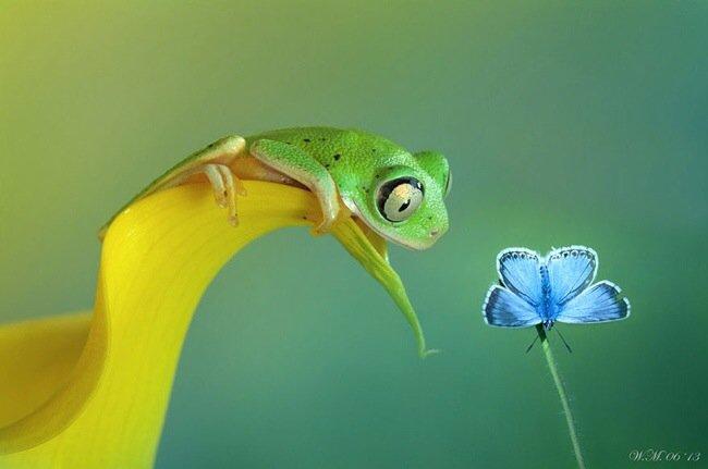 ภาพถ่าย Macro โลกของกบ สวยงาม ชวนฝัน เกินบรรยาย 14 - macro picture