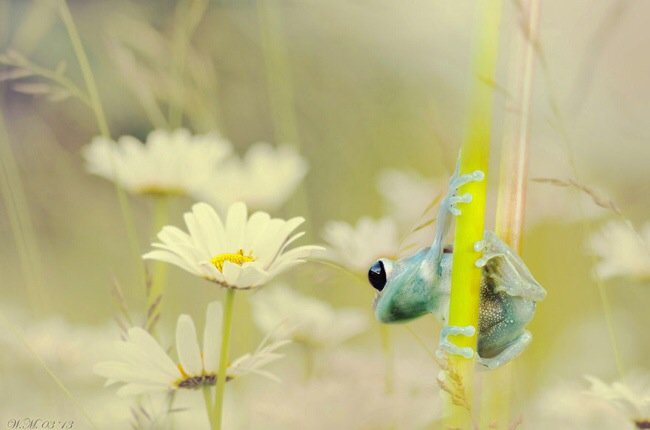 ภาพถ่าย Macro โลกของกบ สวยงาม ชวนฝัน เกินบรรยาย 24 - macro picture