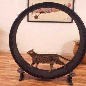 One Fast Cat: แมวถีบจักร..เครื่องออกกำลังกายของแมว 15 - ออกกำลังกาย
