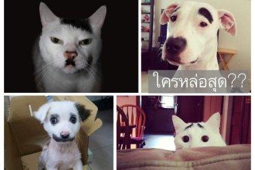 สัตว์ที่โด่งดังในโลกออนไลน์ เพราะลวดลายแปลกๆ 13 - สัตว์แปลก