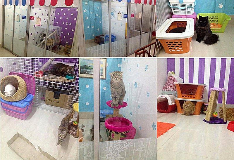 111 Cat Care Shop โรงแรมแมวเหมียว