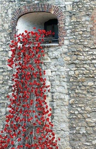 20140804 211502 76502785 Installation Art ..ดอกป๊อปปี้ไหลนองเพื่อรำลึกถึงผู้เสียชีวิตในสงครามโลกครั้งที่1