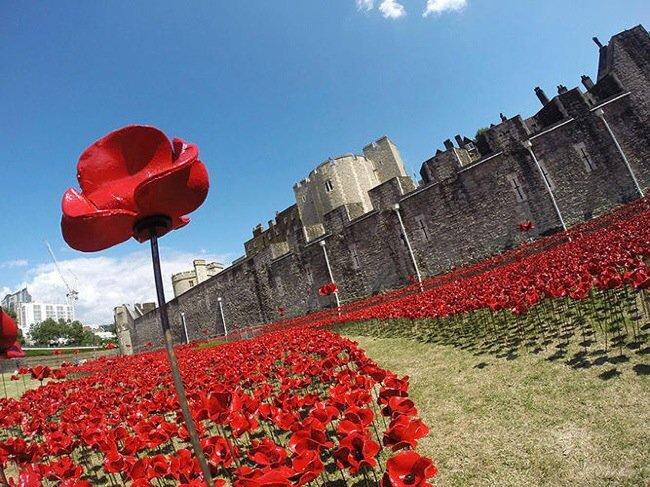 20140804 211502 76502890 Installation Art ..ดอกป๊อปปี้ไหลนองเพื่อรำลึกถึงผู้เสียชีวิตในสงครามโลกครั้งที่1