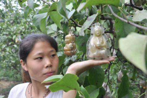 %name เกษตรกรจีนไอเดียดีพลิกจุดต่างโดนใจ ปลูกลูกแพร์ขึ้นรูปเจ้าแม่กวนอิม ขายกระจุย