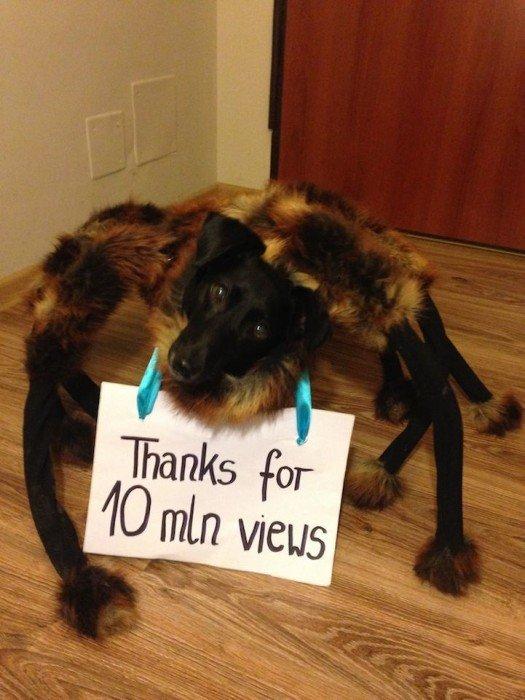 IMG 5229 สุดยอดไวรัลคลิป..Giant Spider Dog เมื่อสุนัขแต่งชุดแมงมุมยักษ์ออกอาละวาดทั่วเมือง