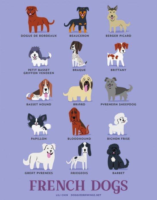 โปสเตอร์น่ารักๆ..สายพันธุ์สุนัขตามถิ่นกำเนิด 13 - Illustrator