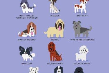 โปสเตอร์น่ารักๆ..สายพันธุ์สุนัขตามถิ่นกำเนิด 23 - หมา