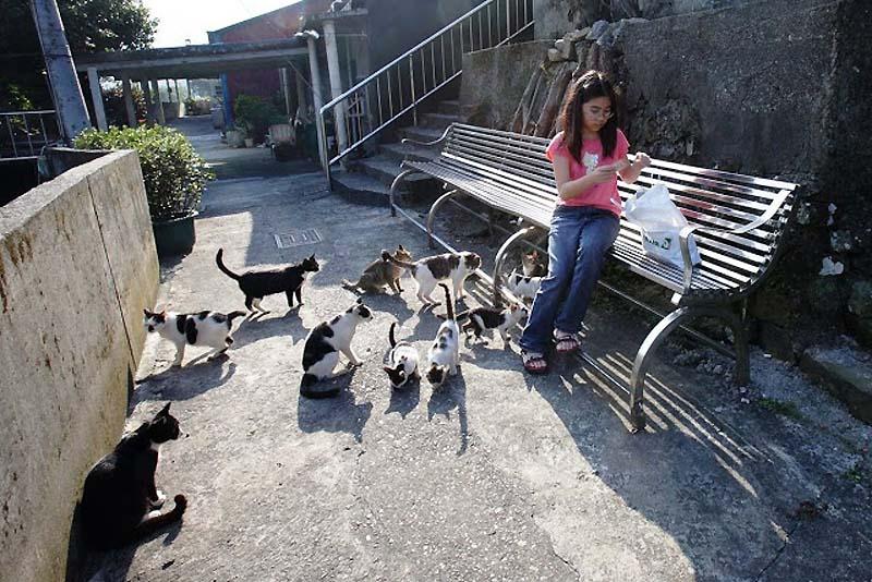 Cats หมู่บ้านแมวเหมียว Houtong Cat Village บนเกาะไต้หวัน