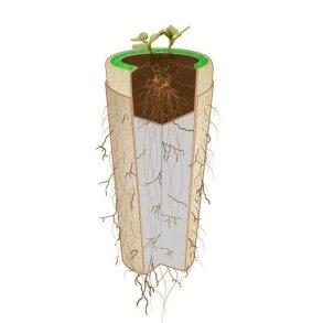 Bios Urn โกศจากวัสดุย่อยสลายได้ง่าย เปลี่ยนเถ้ากระดูกเป็นต้นไม้ 14 - biodegradable