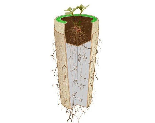 Bios Urn โกศจากวัสดุย่อยสลายได้ง่าย เปลี่ยนเถ้ากระดูกเป็นต้นไม้ 28 - รีไซเคิล
