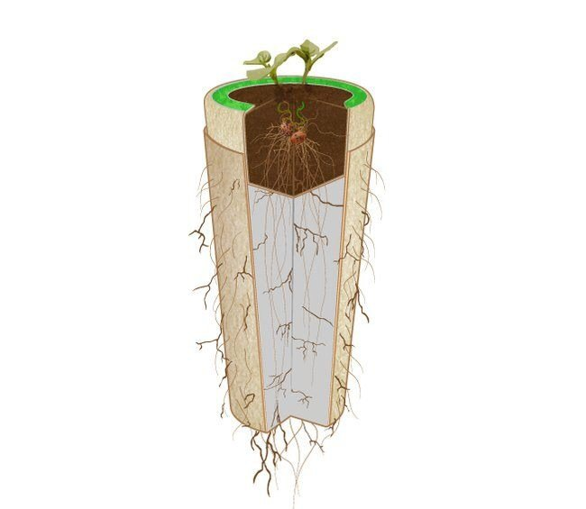 IMG 6672 Bios Urn โกศจากวัสดุย่อยสลายได้ง่าย เปลี่ยนเถ้ากระดูกเป็นต้นไม้