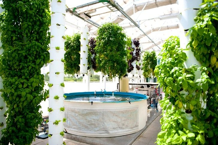 สวนเกษตรบนหลังคาตึก ปลูกผักด้วยระบบ hydroponics ช่วยบำบัดน้ำเสียในบ่อเลี้ยงปลา 14 - roof
