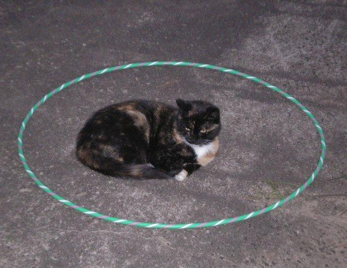 IMG 6822 วิธีล่อแมวมาติดกับดัก ทำเองก็ได้ ง่ายๆ 3 ขั้นตอน