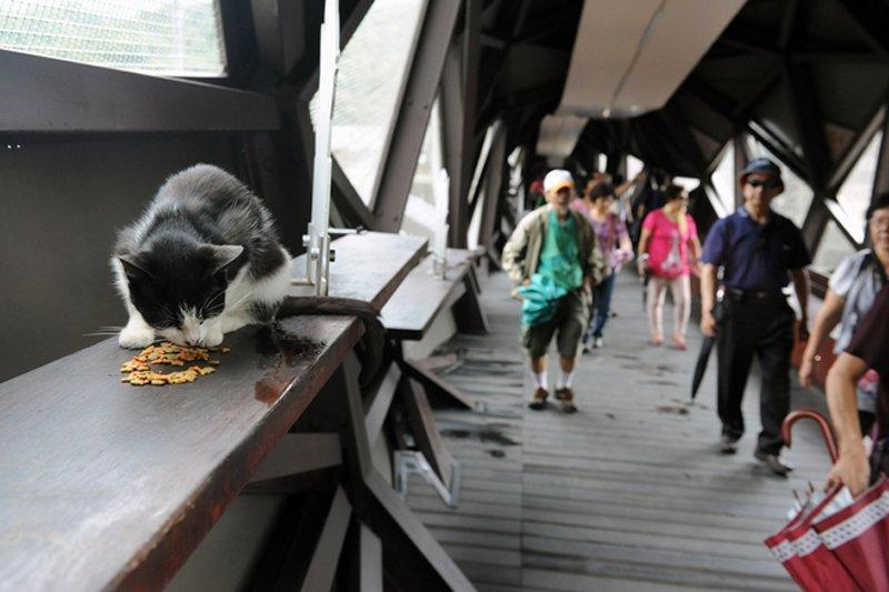 OB YA129 0702CA H 20130628054600 หมู่บ้านแมวเหมียว Houtong Cat Village บนเกาะไต้หวัน