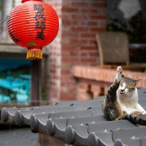 """หมู่บ้านแมวเหมียว """"Houtong Cat Village"""" บนเกาะไต้หวัน 16 - pet"""