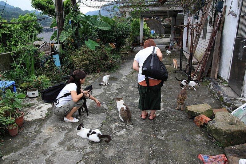 houtong cats 246 หมู่บ้านแมวเหมียว Houtong Cat Village บนเกาะไต้หวัน