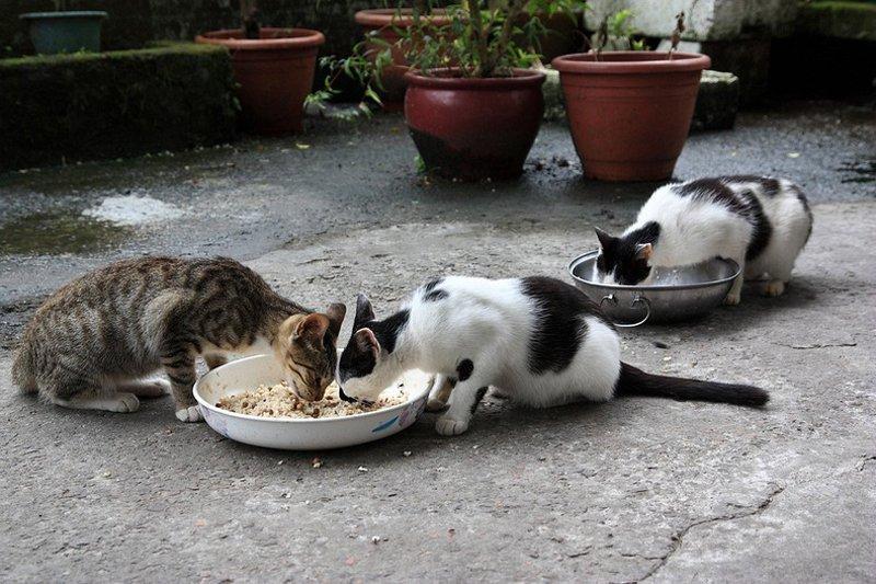 houtong cats 252 หมู่บ้านแมวเหมียว Houtong Cat Village บนเกาะไต้หวัน
