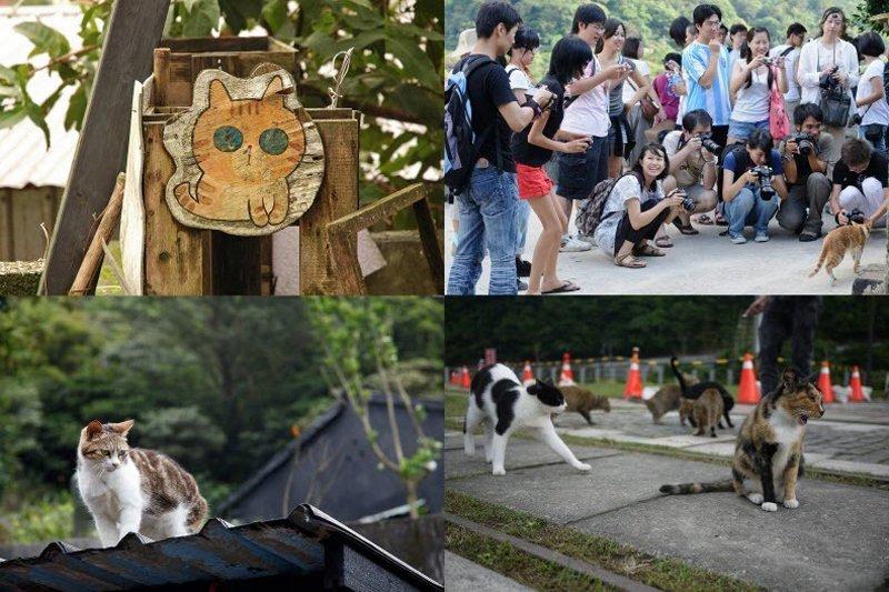 houtong-cats[2]