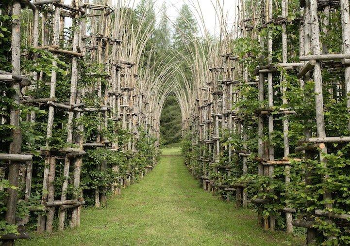 IMG 8425 โบสถ์ต้นไม้..ตัวอย่างงานnatural architectureที่น่าประทับใจที่สุดในโลกชิ้นหนึ่ง