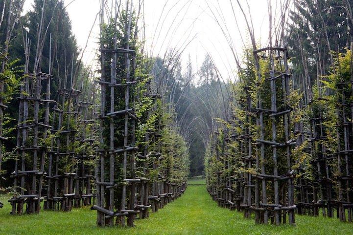 IMG 8433 โบสถ์ต้นไม้..ตัวอย่างงานnatural architectureที่น่าประทับใจที่สุดในโลกชิ้นหนึ่ง