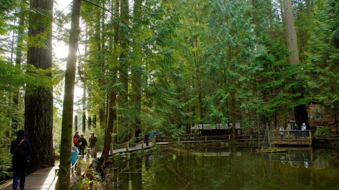 Capilano-Suspension-Bridge-62298
