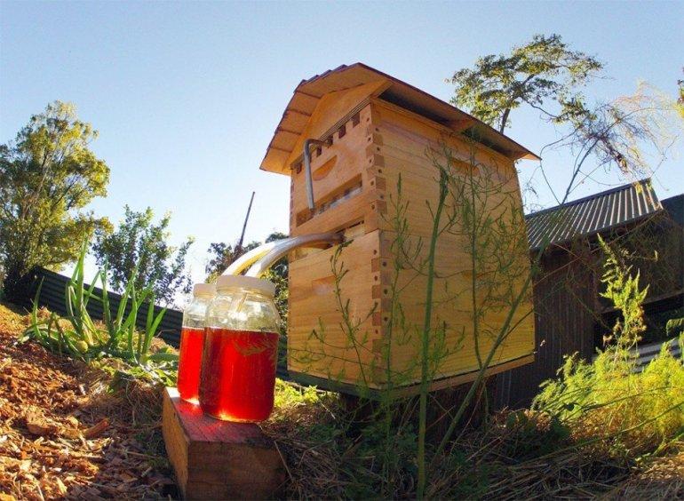 เลี้ยงผึ้ง..ได้น้ำผึ้งสดใหม่จากรัง ง่ายๆ เพียงเปิดก๊อก ไม่ทำอันตรายผึ้ง 13 - Bee