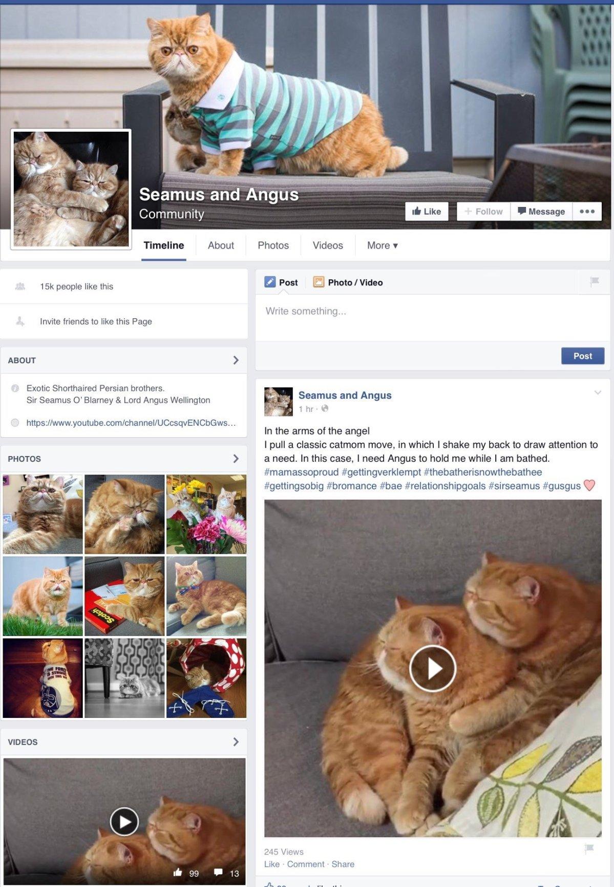 พลาดไม่ได้..คลิปฉาวแมวพลอดรัก ปลุกปล้ำกันน่ารักผุด..ผุด.. 23 - Garfield