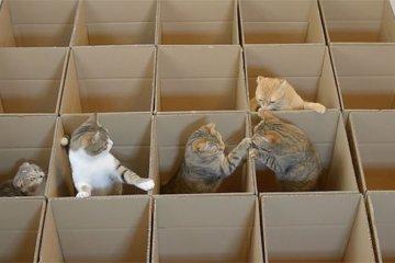 แมว9ตัว กับเขาวงกตจากกล่องกระดาษ 18 - กล่องกระดาษ