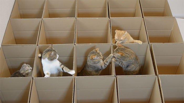 แมว9ตัว กับเขาวงกตจากกล่องกระดาษ 19 - แมว